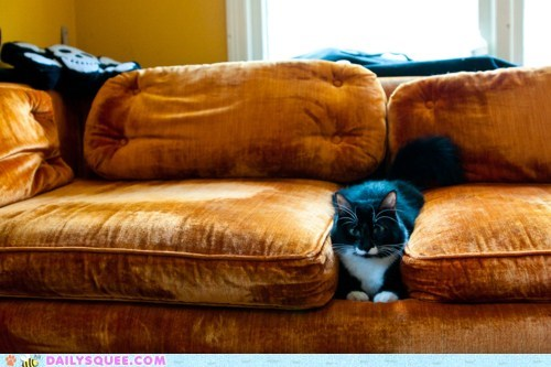 acting like animals cat couch excuse Hall of Fame indignant stuck warm - 5766138880
