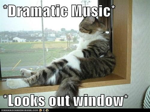 cat dramatic window