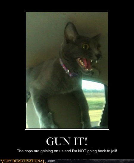 cat,gun it,hilarious,scared,seat