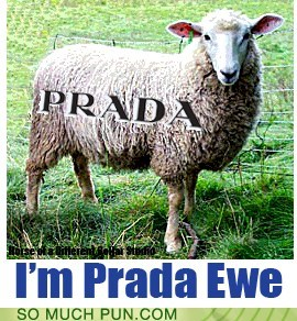 double meaning,encouragement,ewe,lamb,literalism,prada,proud,sheep,similar sounding,you