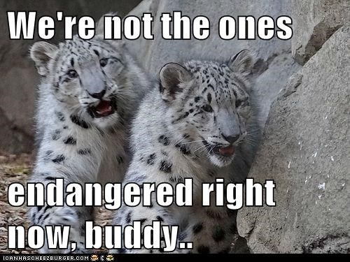 We're not the ones endangered right now, buddy..