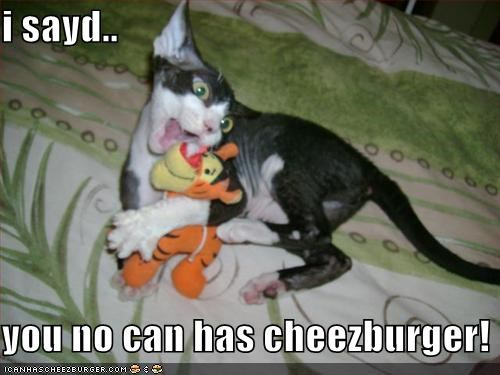 Cheezburger Image 576792320