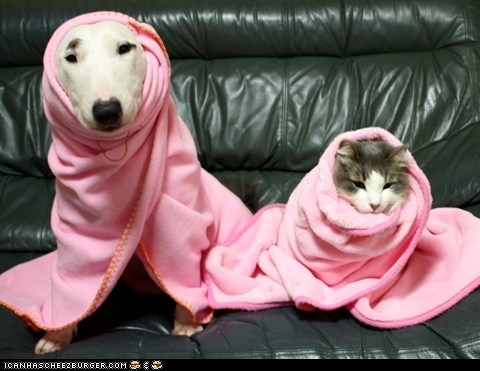blankets dogs goggies goggies r owr friends Interspecies Love pink pretty snug - 5768413440