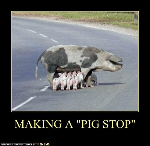 "MAKING A ""PIG STOP"""