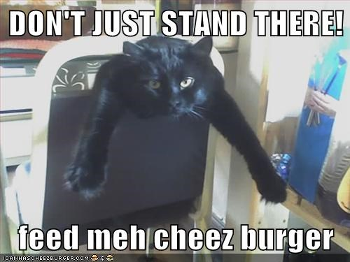 Cheezburger Image 5768617472