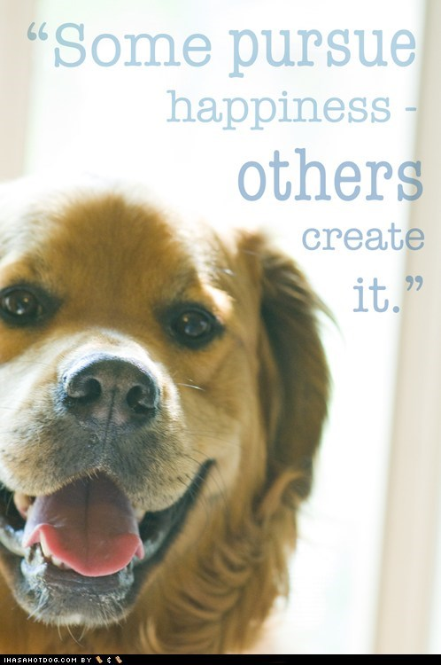 happiness happy happy dog mixed breed whatbreed - 5768620800