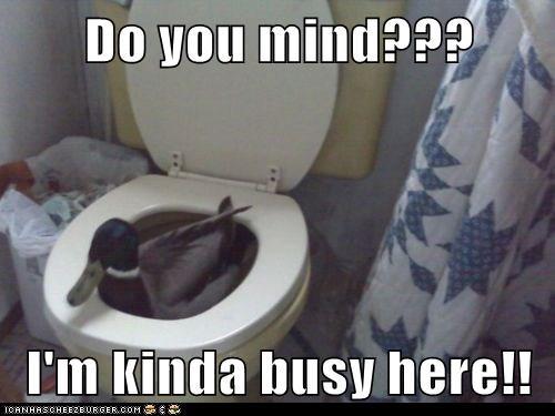 do you mind ducks bathroom toilet busy - 5768681472