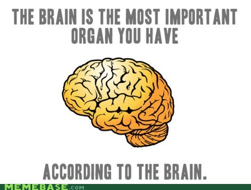 brain facts importance organs scumbag brain - 5769190912