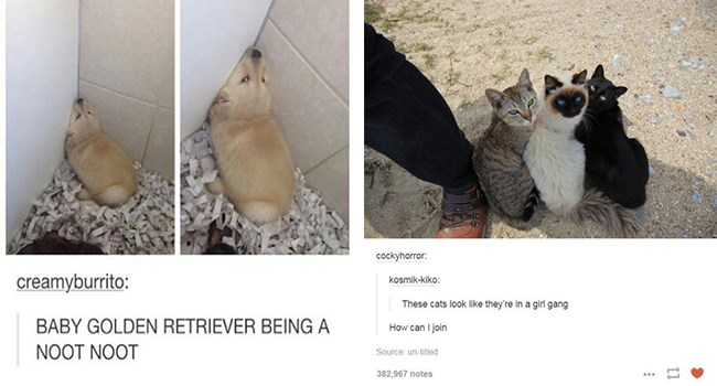 memes about animals from tumblr
