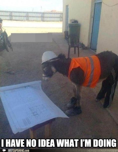 animals,construction,donkey,hard hat,i have no idea what im doing