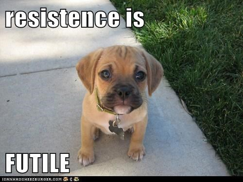 adorable best of the week boxer cute futile Hall of Fame puppy resistance is futile resistence