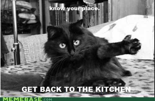 cat,kitchen,Memes,place