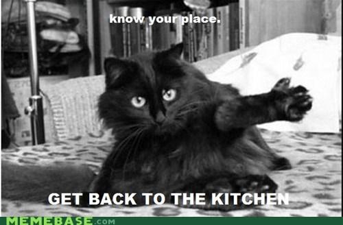 cat kitchen Memes place - 5769750784