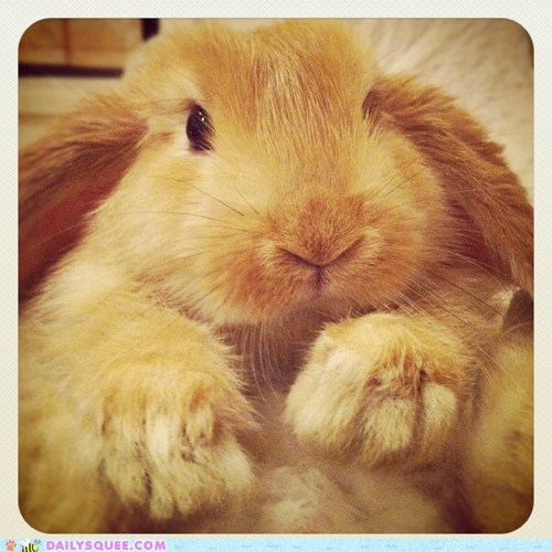 adorable bunny closeup Hall of Fame hands happy bunday nose rabbit reader squees - 5769807872