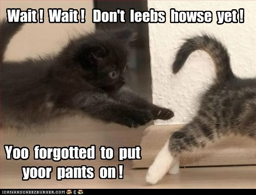 caption captioned cat Cats dont forgot house kitten leave nekkid pants put wait yet - 5769831680