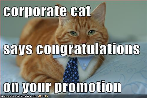 corporate cat says congratulations on your promotion cheezburger
