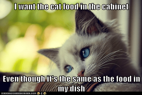 I want the cat food in the cabinet Even though it's the same as the food in my dish
