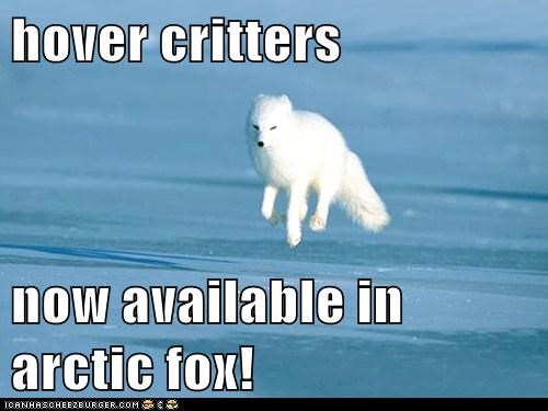 levitating,arctic fox,hover,now available,critters