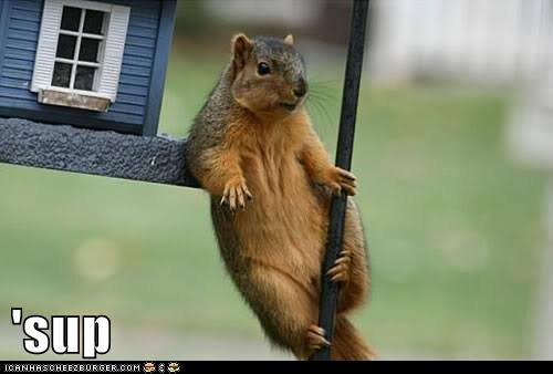 Funny meme and picture of an overly confident squirrel that is acting like he just bought that house.