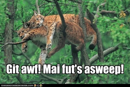 annoyed trees asleep get off lynxes foot - 5770888960