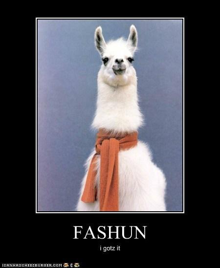scarf llama fashion alpaca i haz it - 5771092224