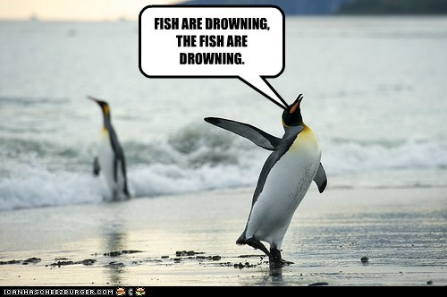alert,caption,captioned,drowning,fish,penguin,penguins,shouting