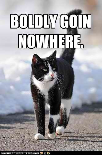 boldly,caption,captioned,cat,go,going,location,nowhere