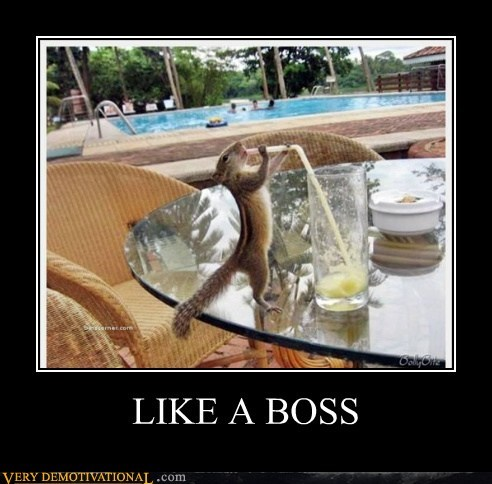 chipmunk,hilarious,Like a Boss,wtf