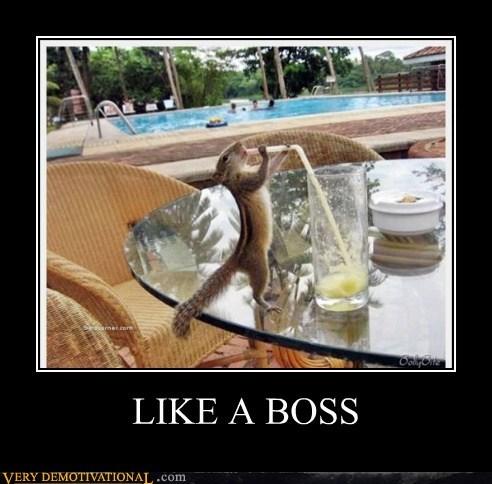 chipmunk hilarious Like a Boss wtf - 5771870208