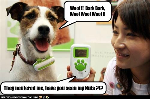 Woof !! Bark Bark, Woof Woof Woof !! They neutered me, have you seen my Nuts ?!?