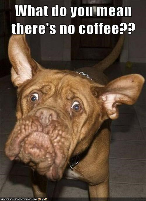 best of the week,caffeine,coffee,Hall of Fame,mixed breed,no coffee,wake up,whatbreed