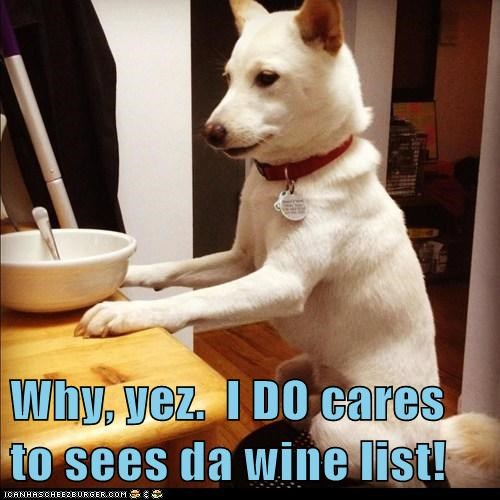 alcohol chair drinking shiba inu sitting table whatbreed wine wine list