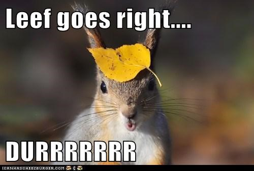 durrr leaf squirrels right there derp - 5773009920