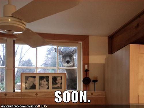 peeking Staring house SOON creepy deer - 5773086720