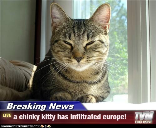 Breaking News - a chinky kitty has infiltrated europe!