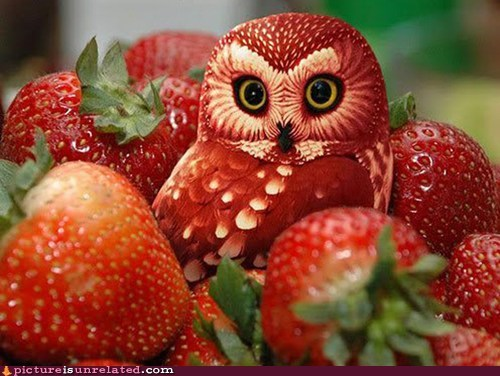 best of week,bird,Owl,photoshop,strawberry,wtf