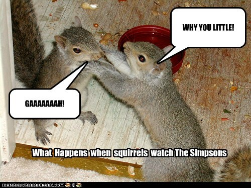 WHY YOU LITTLE! GAAAAAAAH! What Happens when squirrels watch The Simpsons