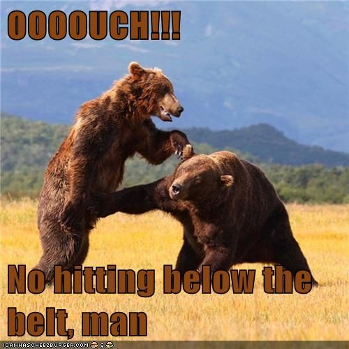 ouch,bears,punching,below the belt,boxing