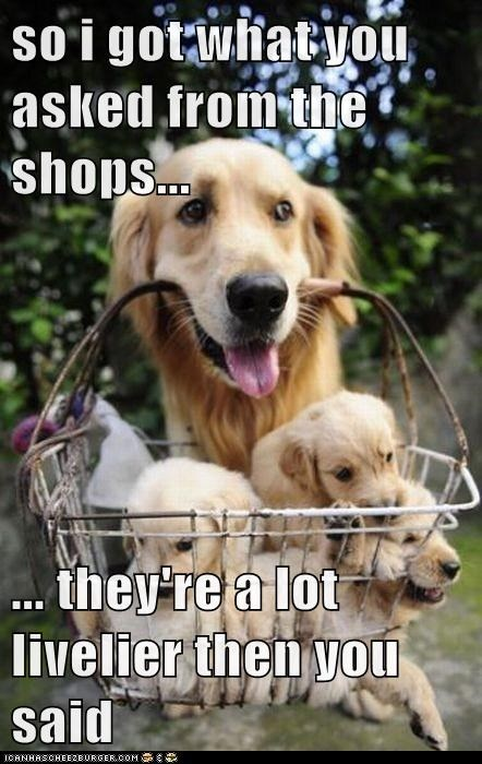 golden retreiver,livlier,puppies,shopping,shopping basket