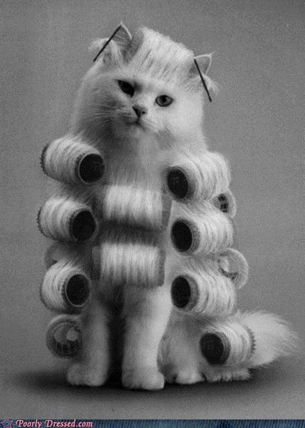 cat Cats haircut hairdo - 5773465856