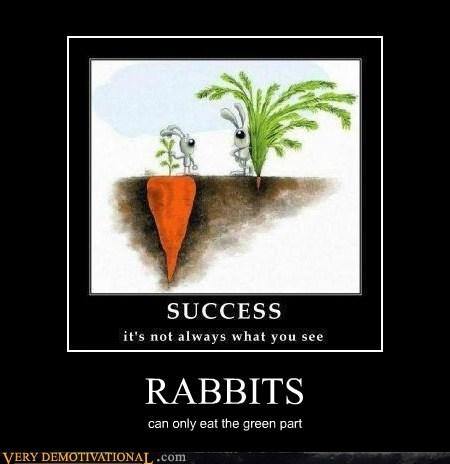 art carrot hilarious huge rabbits - 5773601280
