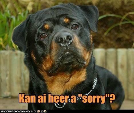 """Kan ai heer a """"sorry""""?"""