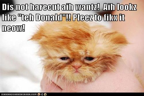 Cheezburger Image 5773964544