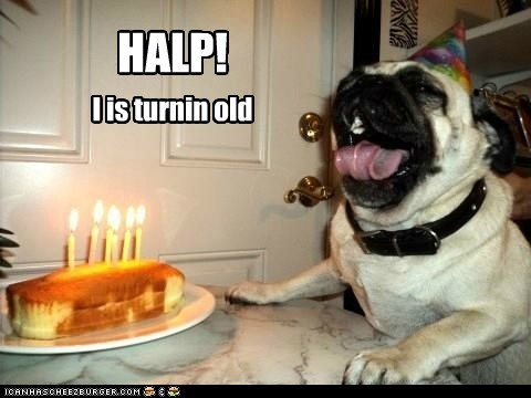 birthday cake delicious food happy birthday help noms old Party pug tongue tongue out - 5774179840
