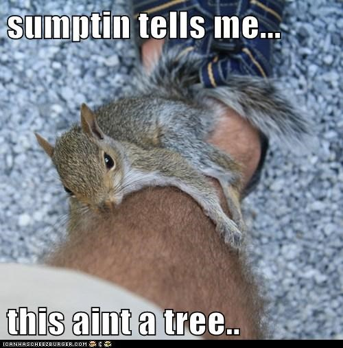 mistaken climbing squirrels nuts tree leg