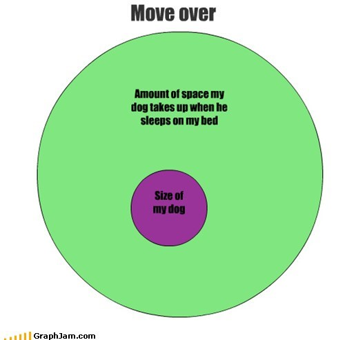 bed,dogs,sleeping,venn diagram