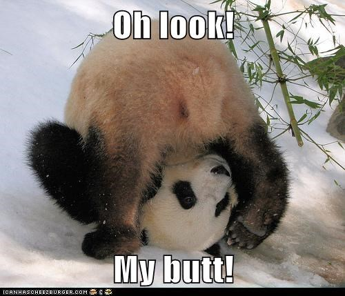 butt ball panda look flipping