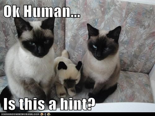 baby,child,confused,hint,Okay,question,siamese,siameses,stuffed animal