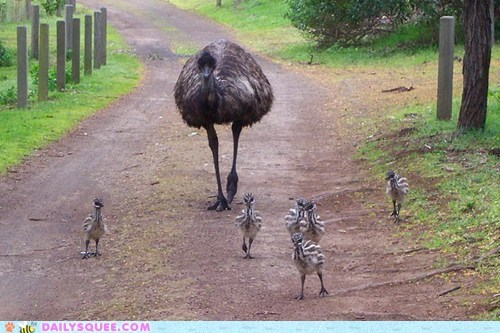 Babies baby children emu emus entourage Father posse squee spree