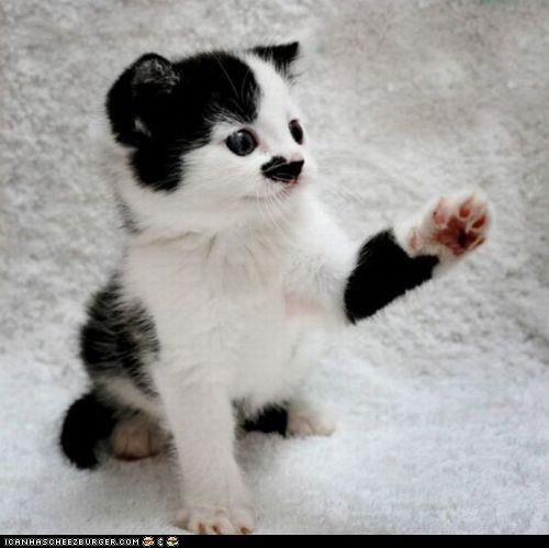 cyoot kitteh of teh day,hitler,look alikes,mustache,paws